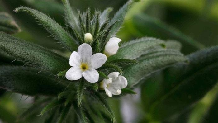 Vegan Flower